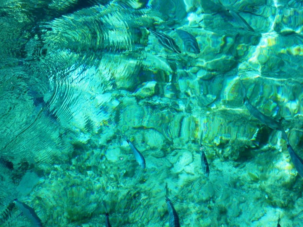 Lavezzi Islands, crystal creal water