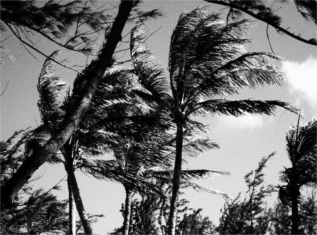 Palmtrees on Waimanalo Beach, black and white