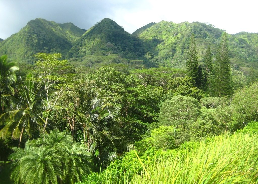 view of the Hawaiian mountains from the Lyon Arboretum