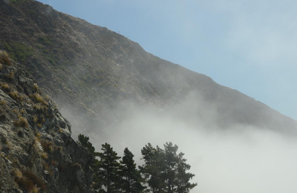 coastal fog on the Pacific Coast Highway