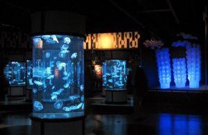 Monterey Aquarium jellyfish containers