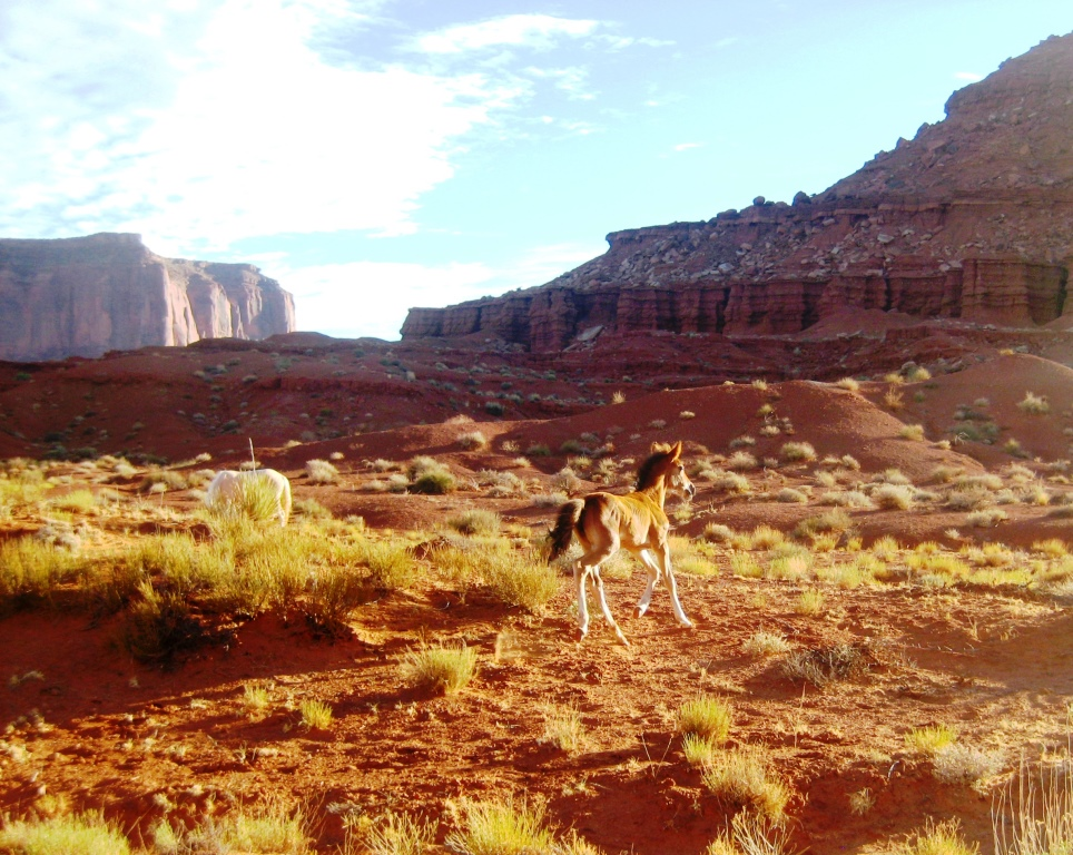 Wild horses in Monument Valley