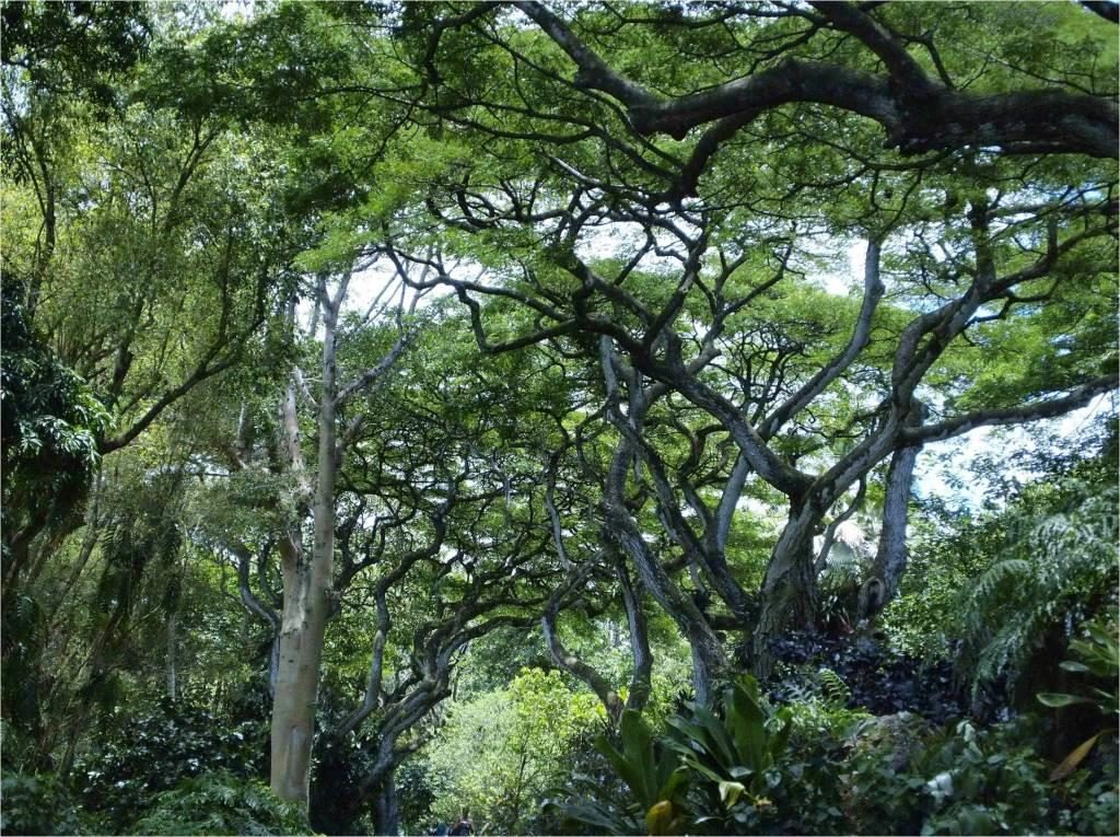 trees in Waimea Valley Garden
