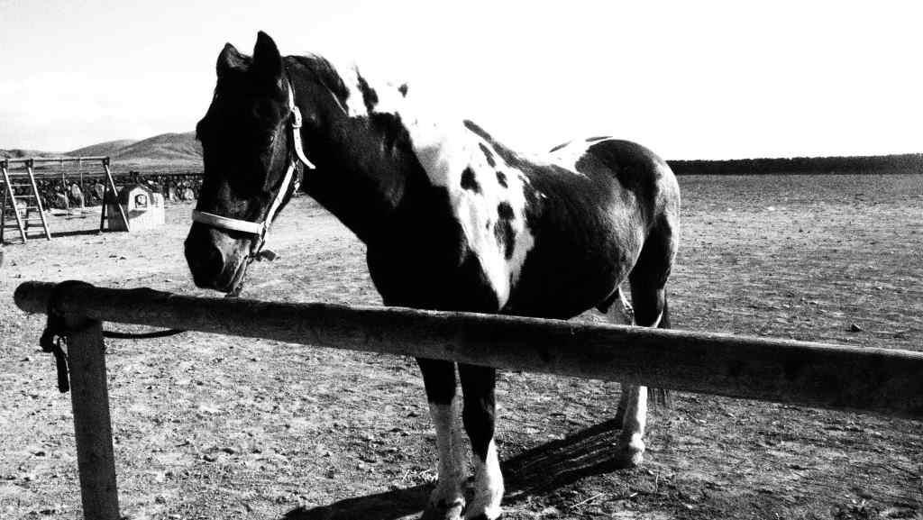 horse on Fuerteventura