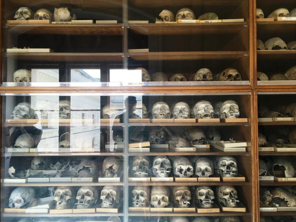 scull collection of the museum of natural history