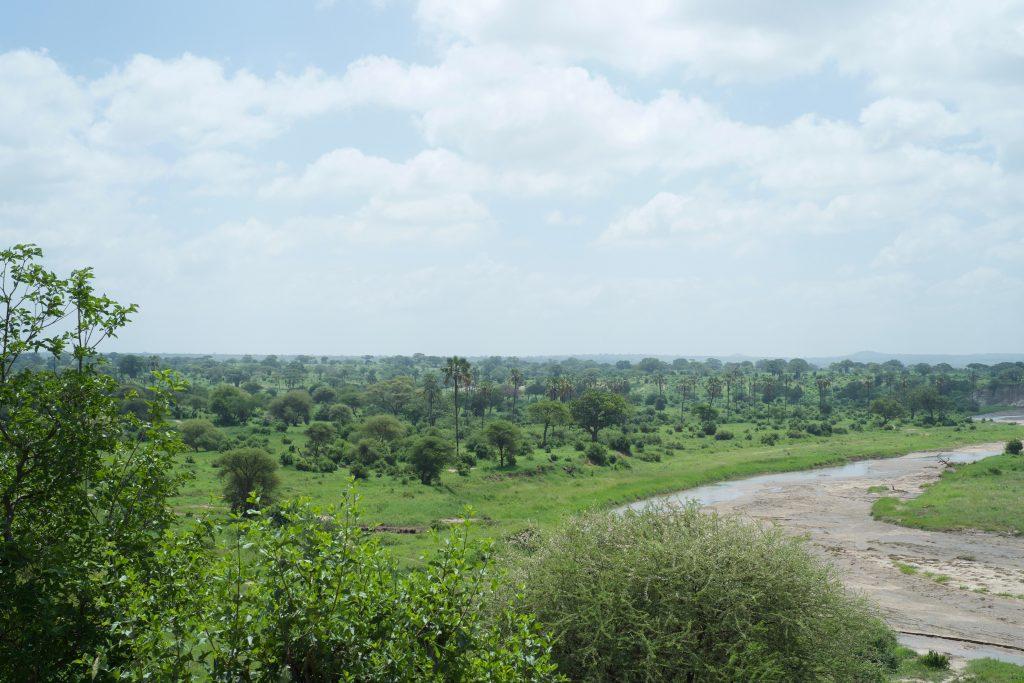 Tarangire NP landscape