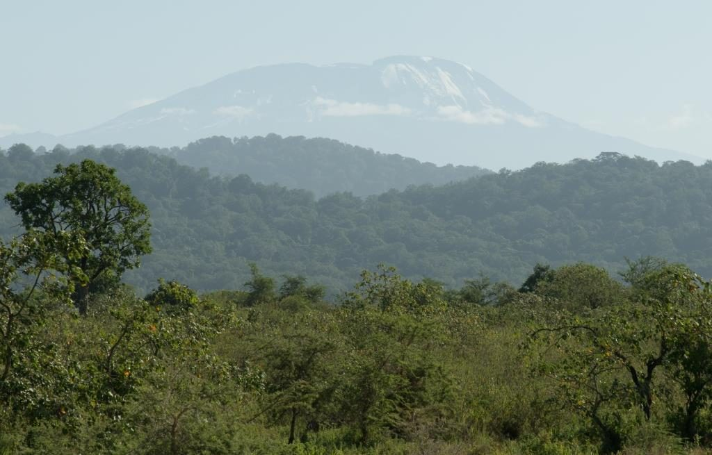 Kilimanjaro, as seen from Arusha National Park