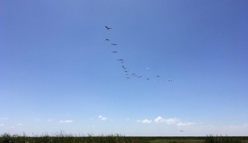 cranes at lake manyara