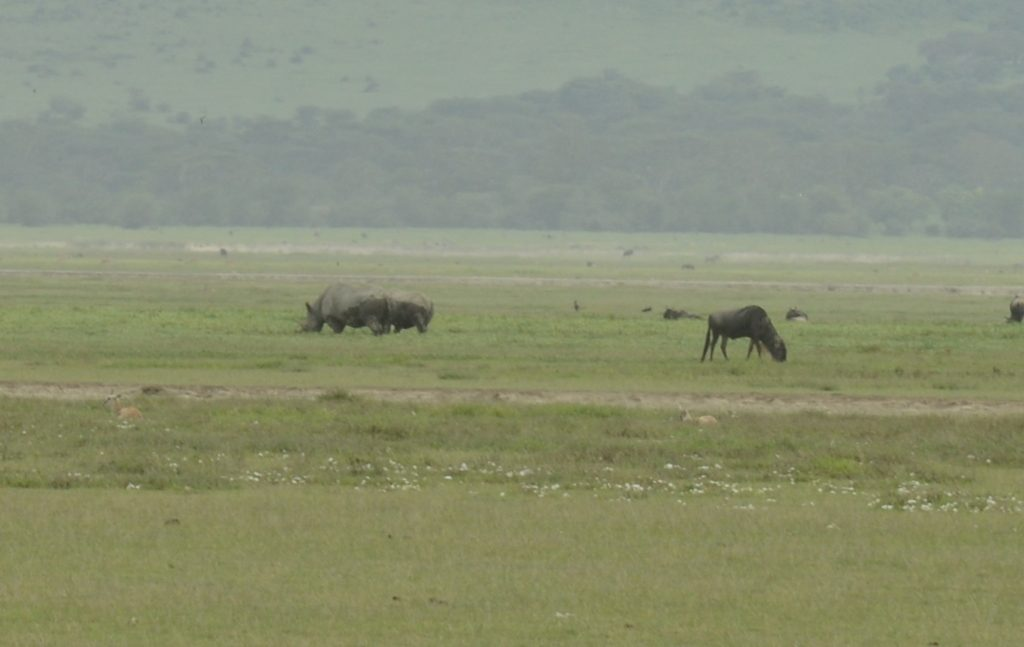 Rhinos at Ngorongoro