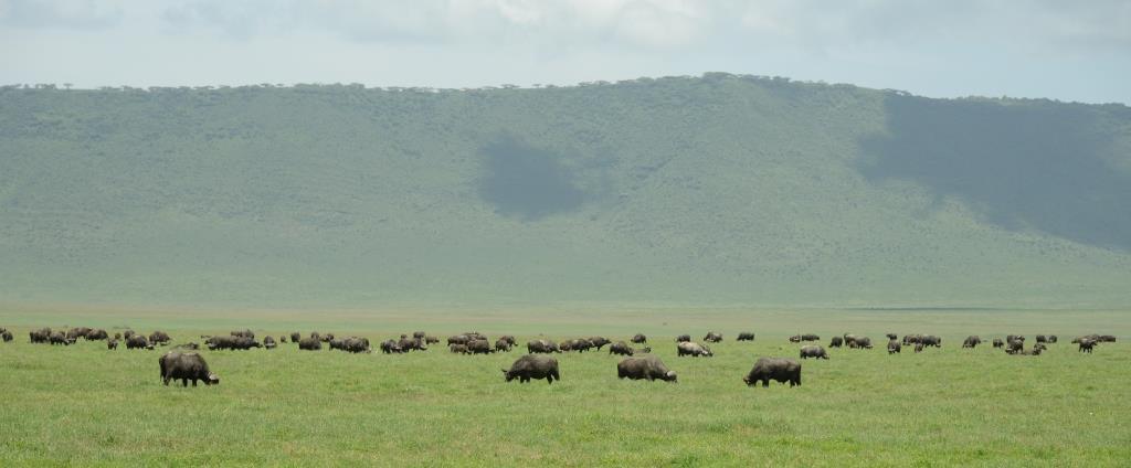 Ngorongoro plain
