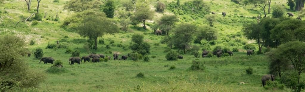 valley of elephants