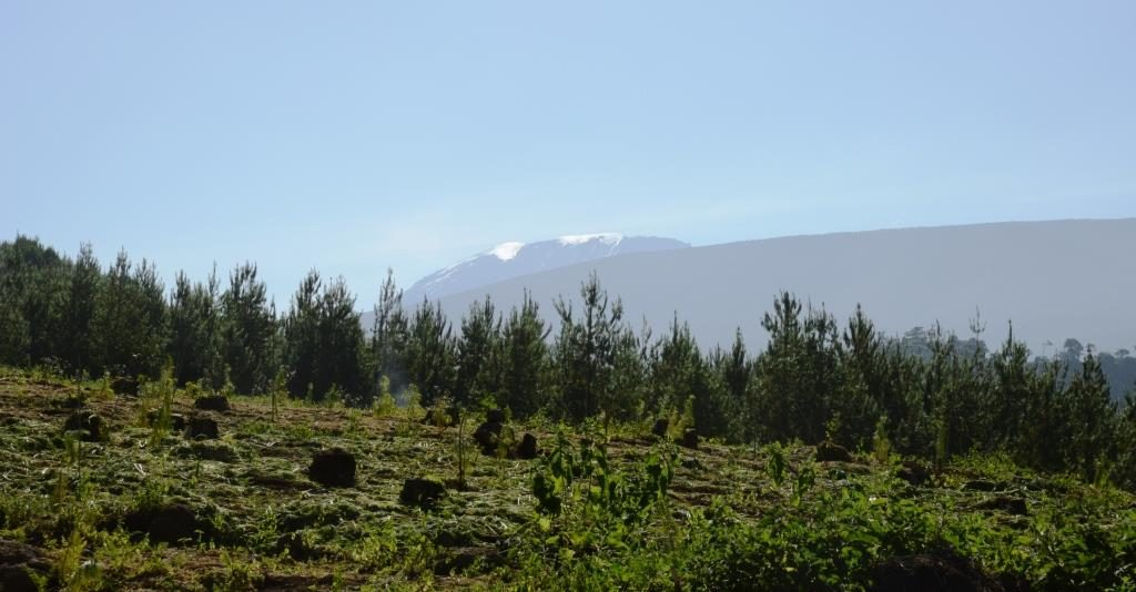 Forest at Kilimanjaro