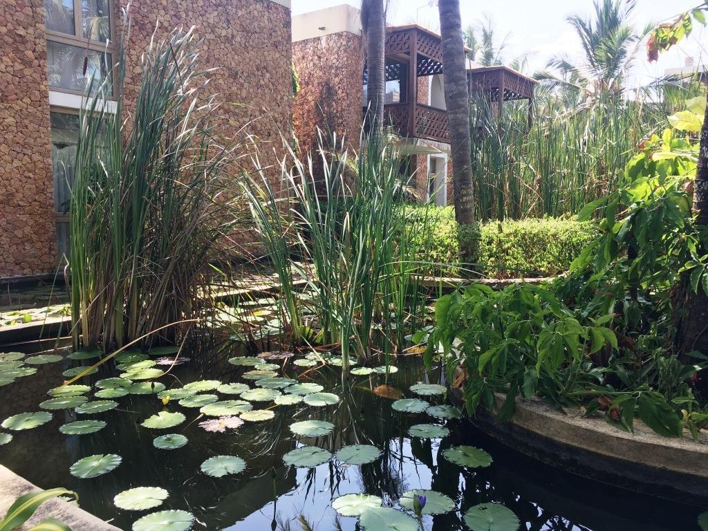 Melia Zanzibar ponds at the buildings