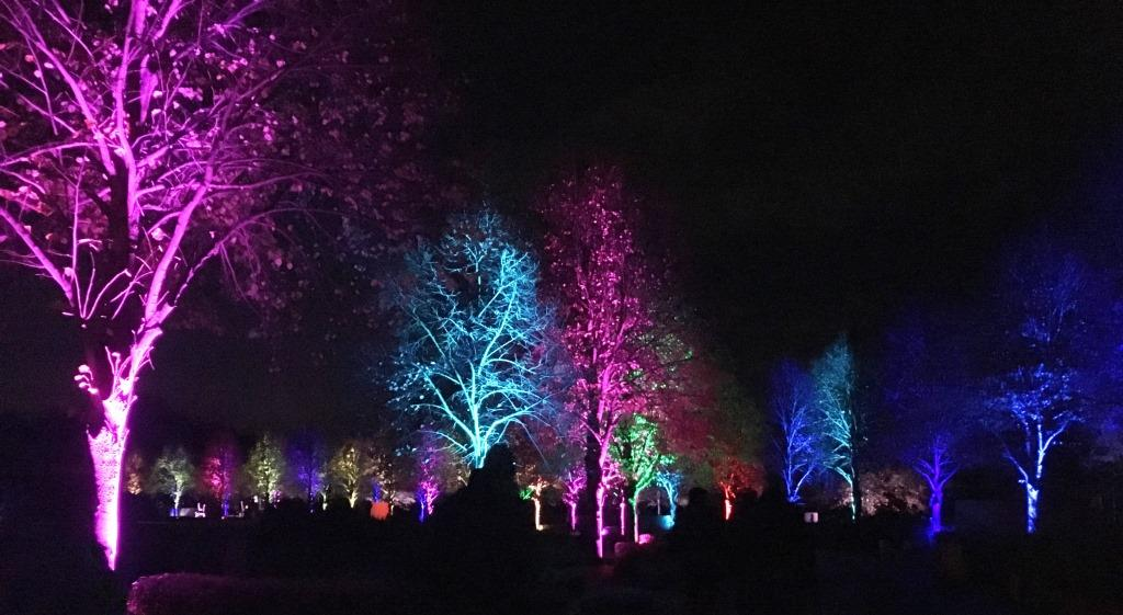 illuminated trees