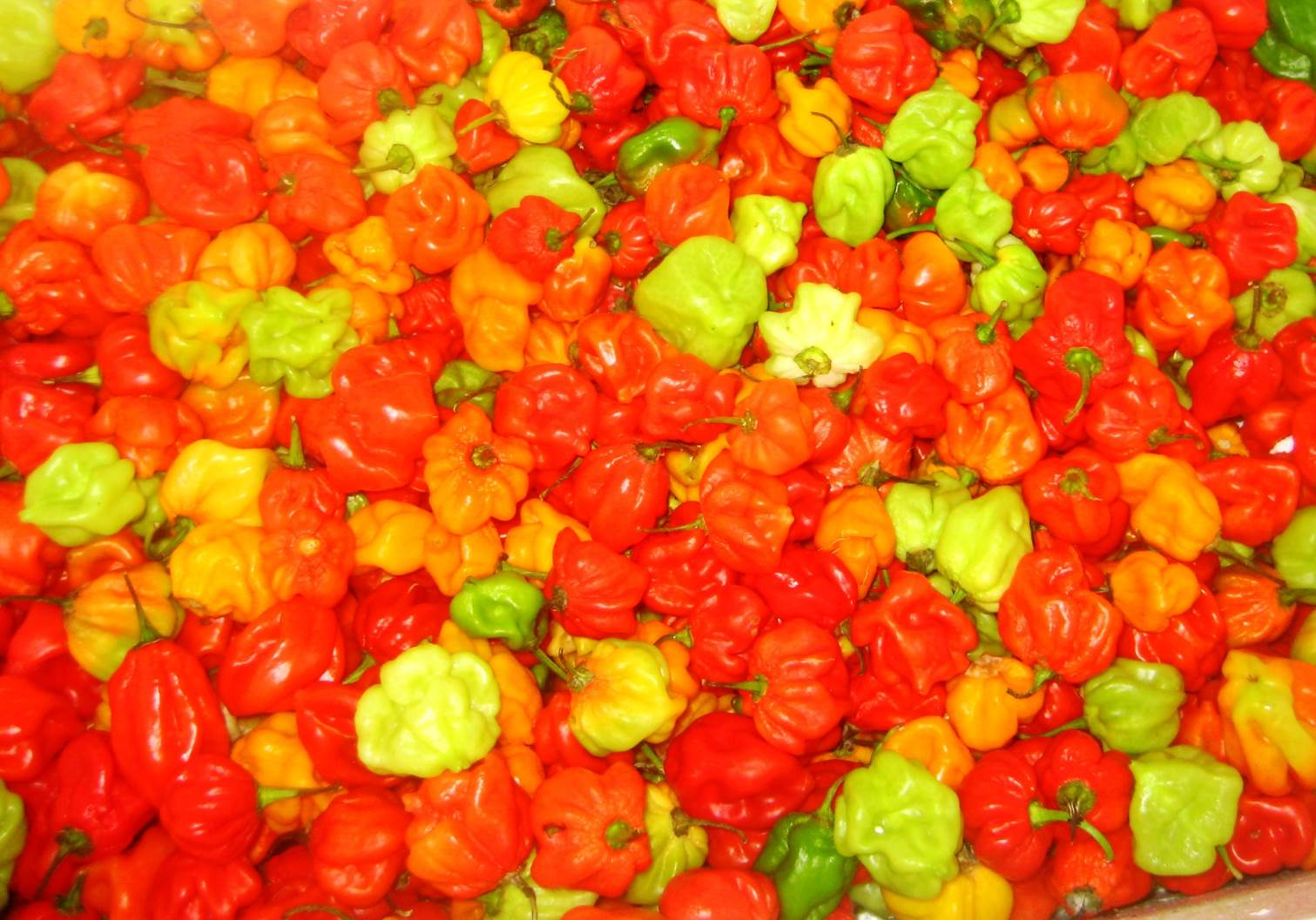peppers at Malé fruit market
