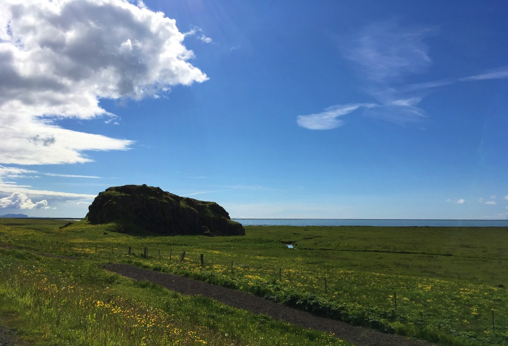 Icelandic coastal meadow