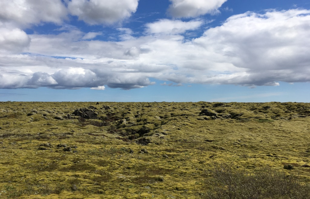 Lava field with lichens