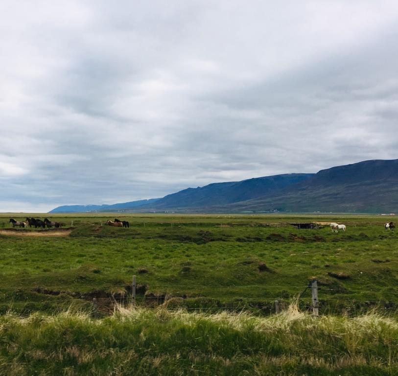 Noethern Iceland, meadow with horses
